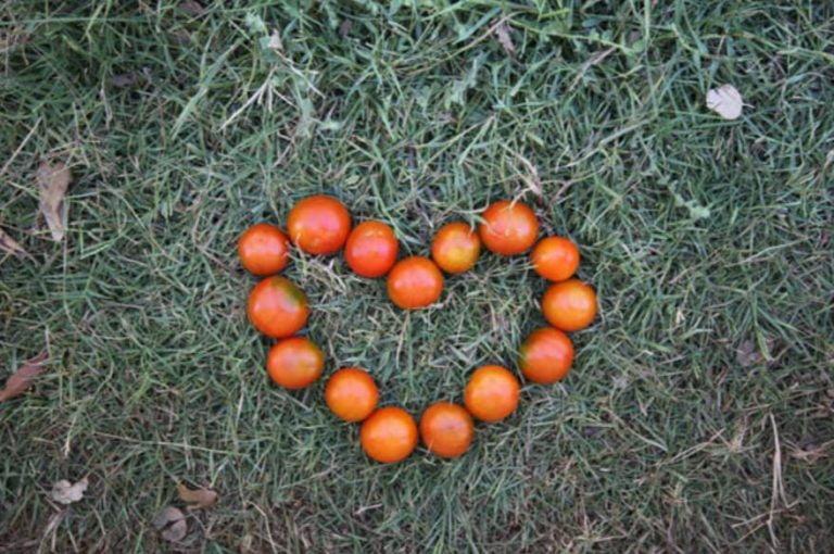 Un Año de Voluntario Europeo Solidario en una EcoAldea